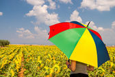 Beautiful woman with colorful umbrella on a Sunflowers field — Stock Photo