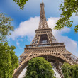 Paris. The Eiffel Tower and trees in summer season — Stock Photo #29457525