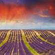 Provence, France. Beautiful Lavender Fields at summer sunset — Stock Photo