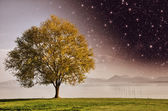 Beautiful view of isolated tree on dramatic background sky — Foto de Stock