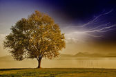 Beautiful view of isolated tree on dramatic background sky — Stockfoto