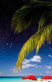 Palms and Caribbean Colors — Stock Photo
