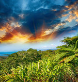 Wonderful trees and vegetation of Queensland, Australia — Stock Photo