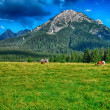 Dolomites, Summer season. Wonderful landscape of Italian Alps — Stock Photo