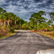 Honeymoon Island State Park in Florida - USA — Foto Stock