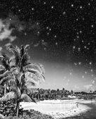 Vegetation and Sky of Caribbean — Stock Photo