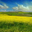 Green tuscany landscape in spring time — Stock Photo