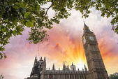 Houses of Parliament, London. Westminster Palace framed by tree — Stock Photo