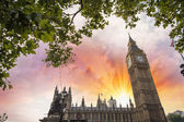 Houses of Parliament, London. Westminster Palace framed by tree — Foto Stock