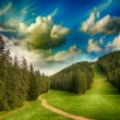 Beautiful woods of Dolomites. Italian Alps meadows and trees in — Stock Photo