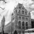 London - Natural History Museum — Stock Photo