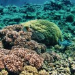 Underwater sea life in Queensland. Australian Coral Reef — Stock Photo
