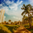 Walkway in a beautiful Park with Palms — Stock Photo