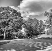Trees, meadows and roads of Central Park - Manhattan, New York C — Stock Photo