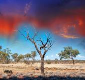Autralian Outback. — Stock Photo