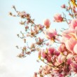 Magnolia tree blossom — Stock Photo #40338967