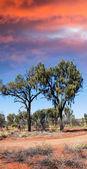 Vegetation und roten sand der australischen outback — Stockfoto
