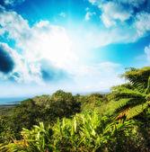 Underbara träd och vegetation i queensland, australien. — Stockfoto