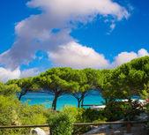 Pine Trees, Corsica coastline — Photo