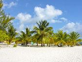 Caribisch strand in santo domingo — Stockfoto