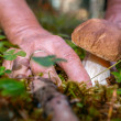 Woman searching for porcini — Stock Photo #50836335
