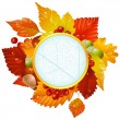 Autumnal round frame with fall leaf, chestnut, acorn and ashberry — Stock Vector