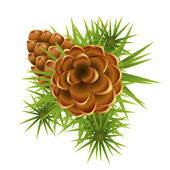 Pinecone ripens on branch — Stock Vector