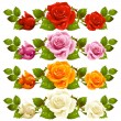 Vector rose horizontal vignette isolated on background. Red, pin — Stock Vector