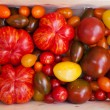 Heirloom tomato cultivars — Stock Photo