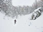 Backcountry skier walking in a snowy mountain forest. — Stock Photo