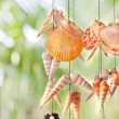 Colorful hanging shells — Stock Photo