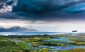 Iceland: lupins meadow over atlantic coastline. — Stock Photo