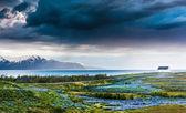Iceland: lupins meadow over atlantic coastline. — Stock Photo