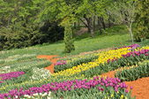 Красочные тюльпаны в парке. Весенний пейзаж. — Стоковое фото