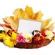 Greeting card for text and autumn flowers — Stock Photo