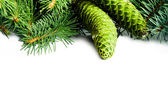 Christmas tree branches and cones — Stock Photo