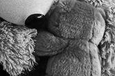 Bianco e nero foto close-up di due orsacchiotti abbracciando ognuno — Foto Stock