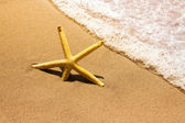 Starfish in the waves — Stock Photo