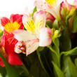 Stock Photo: Bouquet of fresh lilies isolated on white background