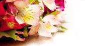 Closeup of fresh lilies boquet — Stock Photo