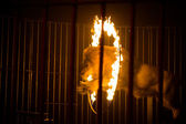 LVIV, UKRAINE - AUGUST 17: Lion jumping through the fire in circ — Stock Photo