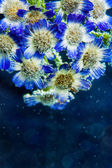Chamomile flowers in water with bubbles on blue background — Stock fotografie