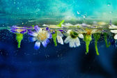 Chamomile flowers in water with bubbles on blue background — Stock Photo