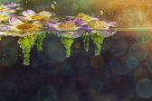Chomomile flowers in water with bubbles on blue background — Stockfoto