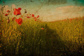 Path in poppy field in old paper retro style — Stock Photo