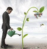 Businessman and a plant of money — Foto Stock