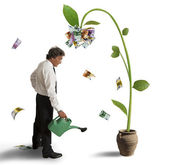 Plant of money — Stock Photo