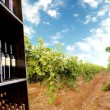 Stock Photo: Wine bottle and vineyard