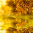 Autumn leaf background — 图库照片