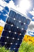 太阳能电池板和新蕾 — 图库照片